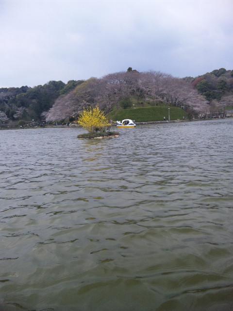 スワンボートの旅
