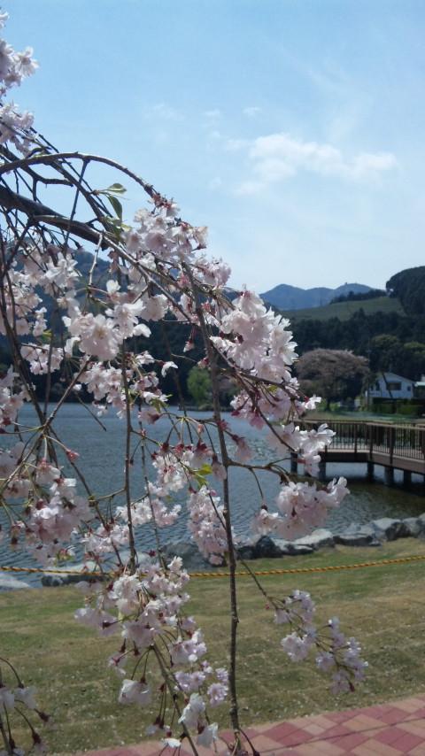 島田の野守の池